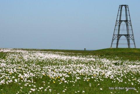 Met het mooie weer de pinksterbloemen al in bloei
