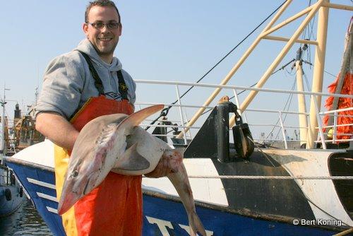 De 'Pieter van Aris' deed de vangst op slechts zo'n 30 meter uit de kust