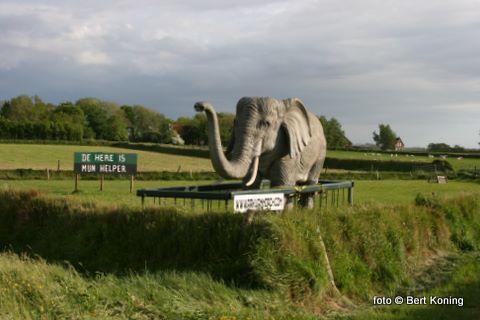 Dat het schip zelf deze zomer Oudeschild zal aan doen is inmiddels bekend. Deze olifant op ware grote in Zuid Haffel is duidelijk al 'een voorbode' van wat er nog allemaal komen gaat.