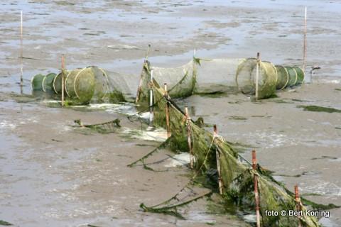 Nu minister Verburg van LNV bekend heeft gemaakt dat er in september, oktober en november een landelijk verbod is op de palingvisserij worden hier ook zowel de fuikenvissers op het binnenwater als op de Waddenzee hierdoor gedupeerd.  Met deze maatregel hoopt men de drastisch teruggelopen palingstand weer wat op peil te brengen.