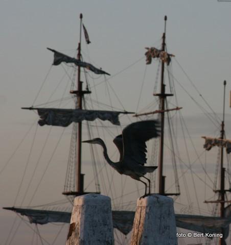 Begin september zorgt ook op Texel nog voor prachtig weer. Hoewel het wel rustiger is in de haven, meert toch nog de nodige bruine vloot en rondvaart af in Oudeschild.