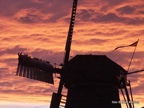 Zaterdag 12 september zijn zowel molen De Traanroeier in Oudeschild als molen 'T Noorden van 10.00 tot 16.00 uur gratis toegangkelijk voor publiek. Op beide molens zijn de vrijwillige molenaars aanwezig om tekst en uitleg te geven over de historie en de werking van de molen.