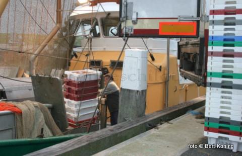 Al sinds twee weken lost een deel van Texelse garnalenvloot op vrijdagmorgen hier zijn vangst. Door drukte van de groeiende offshore activiteiten en drukte aan de vertrouwde onderzeebootkade werd men bij de afslag in Den Helder voor het lossen verwezen achter de brug. In afwachting tot eerst de verse vis (als prioriteit) verhandeld was. Besloten werd zelf Kaan uit Hypolytushoef in te huren voor het vervoer naar de afslagen van Harlingen en Lauwersoog. Visserijvoorman Ben Daalder gaf aan achter de actie te staan. De afgelopen veertien dagen werd hier gelost door de TX 27, de TX 65, de TX 21, TX 41 en de TX 42.