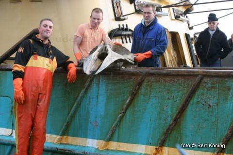 Vrijdagmorgen werd door de bemanning van de 'Branding' van de firma Betsema een complete opgeviste schedel van een dwergvinvis op de kade gelost. De TX 38 deed deze bijzondere vangst, met ook de nodige losse wervels,  op de Klaverbank. Aldus de plaatelijk walvisdeskundige Adrie Vonk van de TX 1 betreft het hier een schedel van een volwassen exemplaar van zo'n 9 meter.
