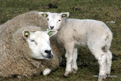 Hoewel de temperatuur vandaag op de Hoge Berg nabij Oudeschild anders doet vermoeden, is vandaag ook op Texel de lente wel offieël begonen