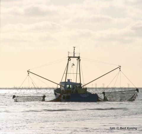 Het was maandagmorgen om 8.00 uur weer ouderwets druk op de haven van Oudeschild. De PO van de landelijke garnalenvissers had voor het weekeind gekozen voor een betere kiloprijs voor de garnalen door het afkondigen van een korte visweek. Het grootse deel van garnalenvissers gaf hier gehoor aan. Waardoor deze week de TX 24, TX 25, TX 42, TX 65, TX 21, TX 41 en de TX 27 slechts voor 3 etmalen naar zee gingen.