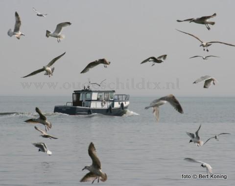 Het schitterende weer van de afgelopen zaterdag was voor menig watersporter aanleiding om de Waddenzee bij Oudeschild op te gaan. Zo ook 'Scintilla Maris' uit de jachthaven van de Watersportvereniging Texel.