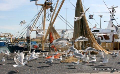 Als donderdag de Texelse garnalenvloot weer afmeerd in Oudeschild dan gaat het netwerk op de kant voor de wekelijkse controle. Aan 'belangstelling' was duidelijk geen gebrek bij de eurokotter van Rick Koning en Eric Boersen.