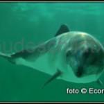 20120414-ecomare-bruinvis-001