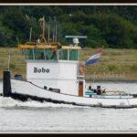 1-BOBO (2)